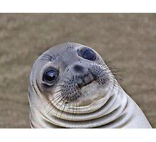 Awkward Seal Photographic Print