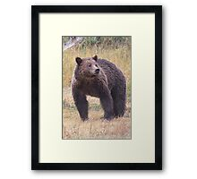 Yellowstone Grizzly Framed Print