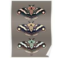 Silk Moths Poster
