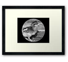 Adorable Chick in black and white Framed Print