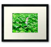 """Cat - Mistic playing """"Pic a Boo"""" Framed Print"""
