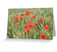Cornfield Poppies Greeting Card