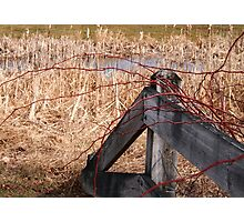 Fence with Vines and Thorns Photographic Print