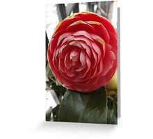 Flower Close-Up, New York City Greeting Card