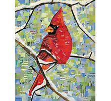 Majestic Red Cardinal Photographic Print