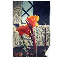 Canna indica #1 Poster