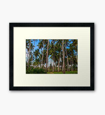 Coconut Jungle Paradise Framed Print