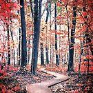 Ruby Forest by Shawna Rowe