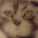 Kitty Powder by CanvasMan