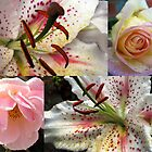 Roses and Lilies Collage - Unframed by BlueMoonRose