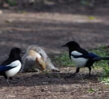 Magpies and Squirrel Sticker