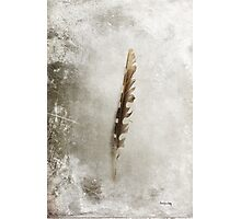 Standing Feather Photographic Print
