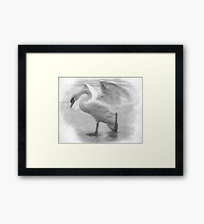 Lonely Swan Framed Print