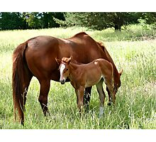 Mother And Foal - Christchurch Photographic Print