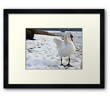 White Swan in the snow Framed Print