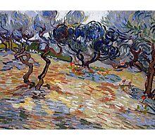 1889-Vincent van Gogh-Olive Trees-51x65,2 Photographic Print