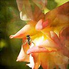 Hover Fly on Rose by Lynn Starner