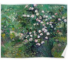 1889-Vincent van Gogh-Roses-33x41,3 Poster