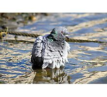 Soggy pigeon Photographic Print