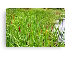 Cattails by the Lake Canvas Print