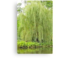 Weeping Willow by the Pond  Canvas Print