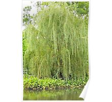 Weeping Willow by the Pond  Poster