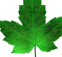 Kiss Me I'm Canadian - St Patrick's Day Sticker