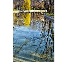 Natural scene. Trees reflected in the water. Photograph. Photographic Print