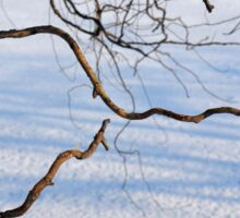 Tree branches on a winter landscape. Sticker