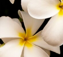 Yellow and White Plumeria Sticker