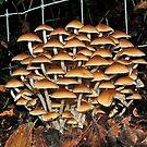 Fungi swarm by relayer51