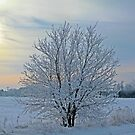 Frosted Sunrise by Heather King