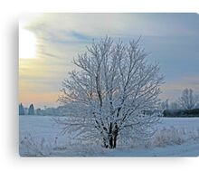 Frosted Sunrise Canvas Print