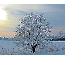 Frosted Sunrise Photographic Print