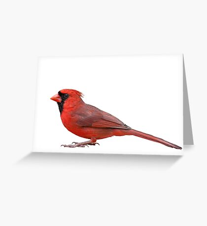 Northern Cardinal Isolated on White Background Greeting Card