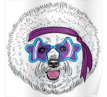 Star Disco dog Bichon Poster