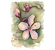 Cherry Blossom Watercolor Painting Photographic Print