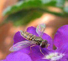 Insect on Purple Flower by emilymhanson