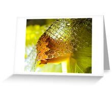 The Demure Daffodil Greeting Card