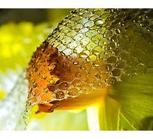 The Demure Daffodil Photographic Print