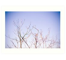 Ghost Trees II // color Art Print