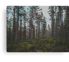 Pine Scent Canvas Print