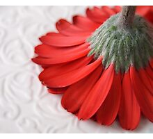 Red Sweep Photographic Print