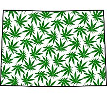 Colorado (CO) Weed Leaf Pattern Photographic Print