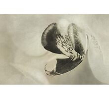 Vintage moth orchid Photographic Print