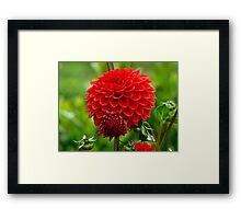 Mother & Child Red Dahlia - Southland - NZ Framed Print