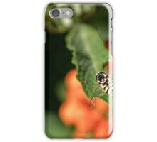 Flying insect at rest Leith Park Victoria 20151203 0800   iPhone Case/Skin