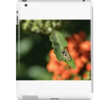 Flying insect at rest Leith Park Victoria 20151203 0800   iPad Case/Skin