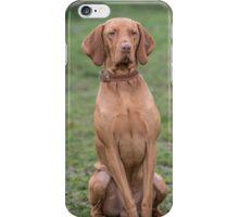 Portrait of a Hungarian Vizla dog iPhone Case/Skin