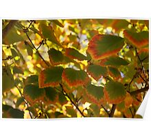 Slowly Changing Dimension - Hot Vibrant Leaf Edges Celebrating the Arrival of Autumn Poster